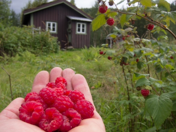 Ta med sukker! (Foto: Carl Norberg)