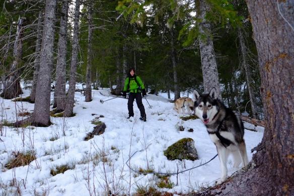 Og på veg ned Storliskaret var det bare å ta seg skiene!